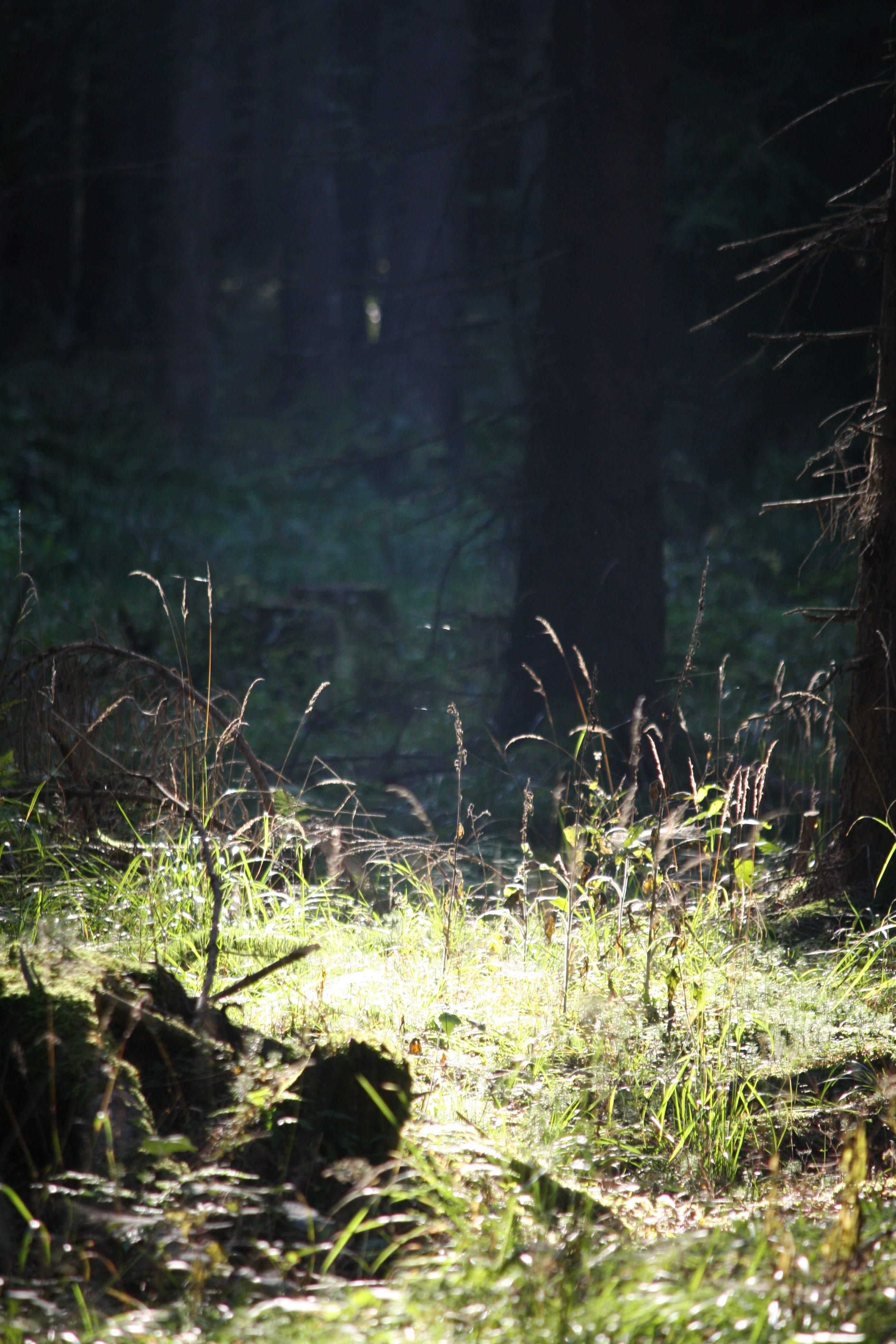 Harzer Wälder